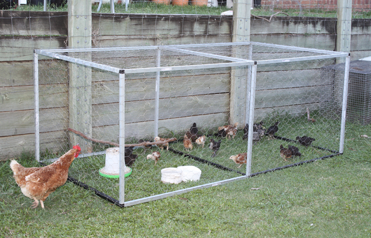 of adoption and constraints of scientific backyard poultry rearing